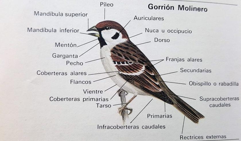 Partes de un ave