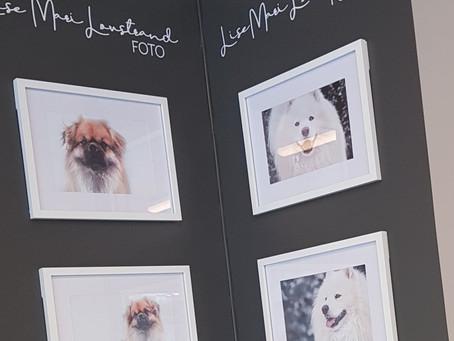Bildevegg hos Joys Hundesalong