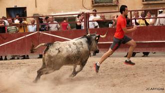 Festejos taurinos en Alfamen para sus fiestas de San Roque 2019