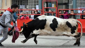 Festejos taurinos de noviembre en Grisen