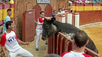 100€ al mejor recorte en las vaquillas de Calatayud