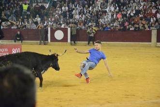 11 ganaderías para las mañanas vaquilleras del Pilar