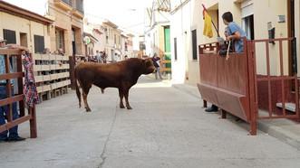 Festejos taurinos en Pedrola del 10 al 13 de octubre