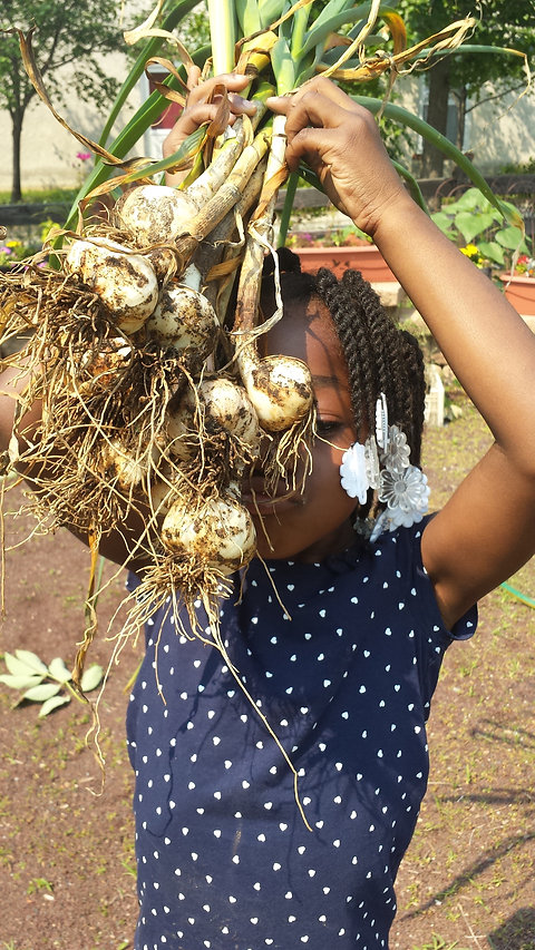garlic girl.jpg