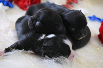 Zoella & Charley babies! 💖💖