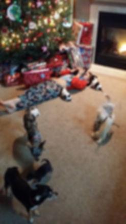 Seth socializing puppies!