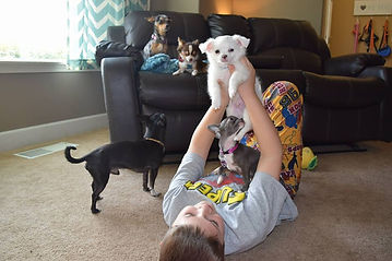 Kids and puppies lounging around