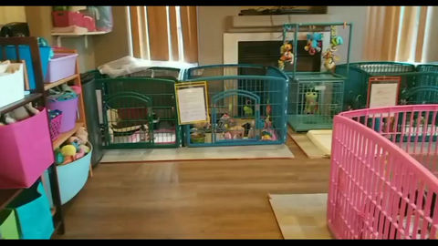 Tour of our puppy room