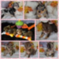 PhotoGrid_1582994788503.jpg