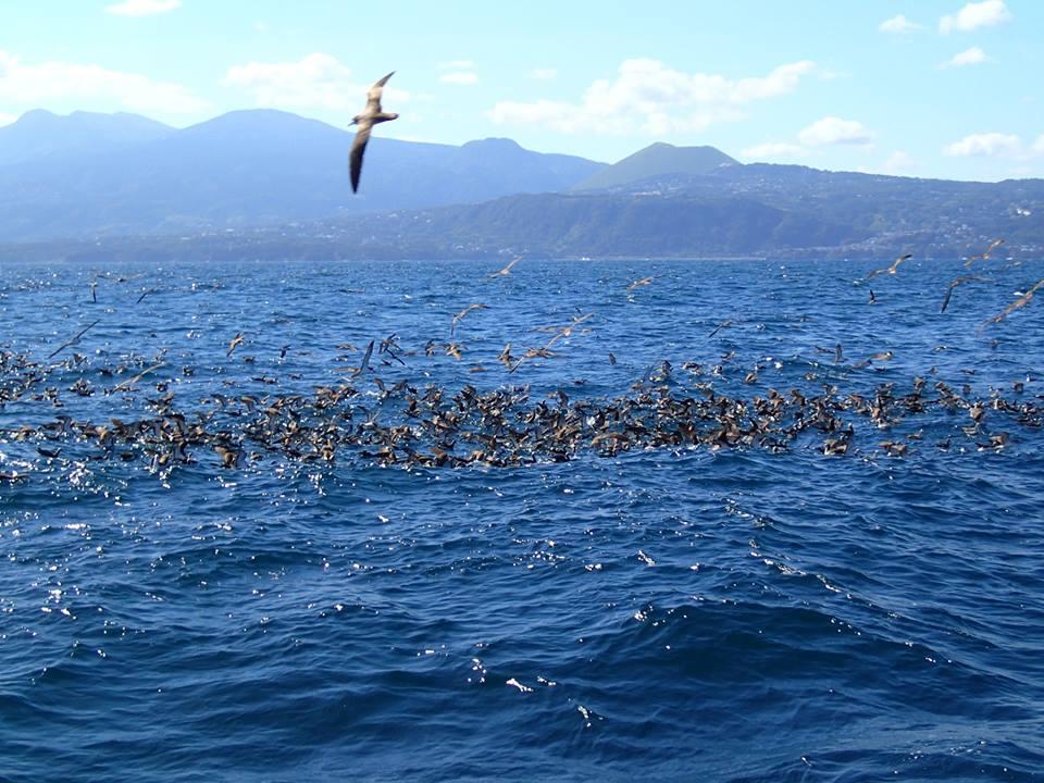海鳥の群れ(鳥山)