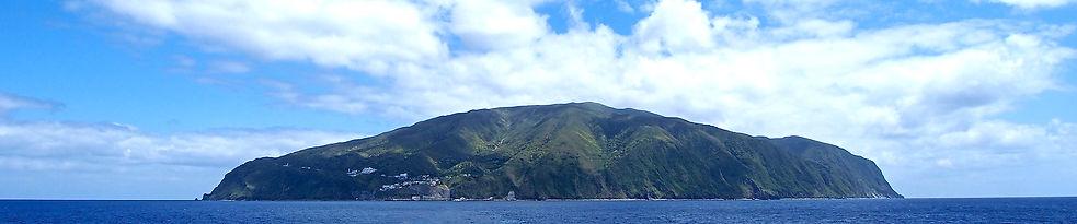 野生イルカと泳ぐ御蔵島みくらじまドルフィンスイムツアー