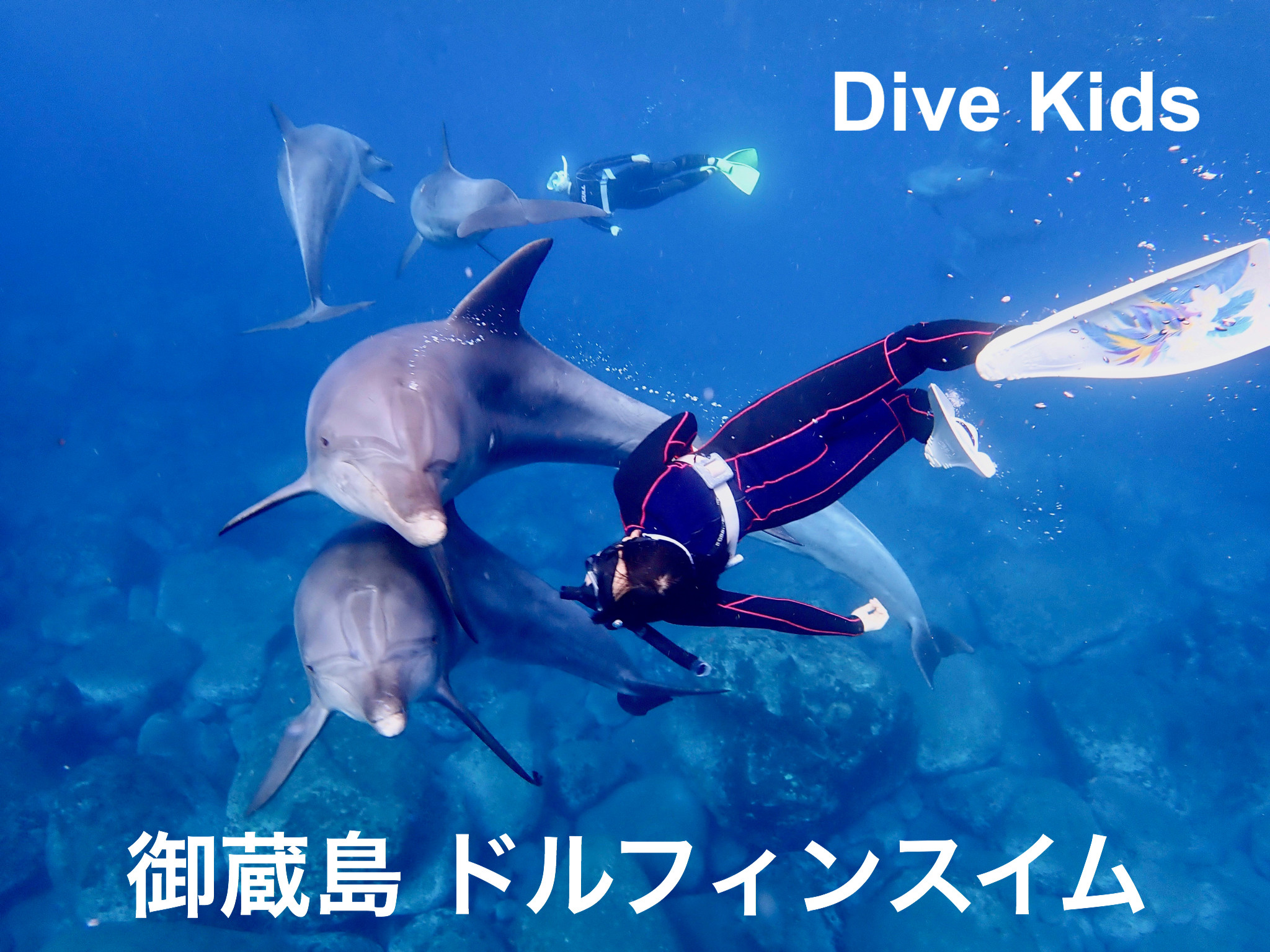 イルカと泳ぐ御蔵島ドルフィンスイムツアー|ダイブキッズ