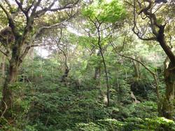 タンテイロの森