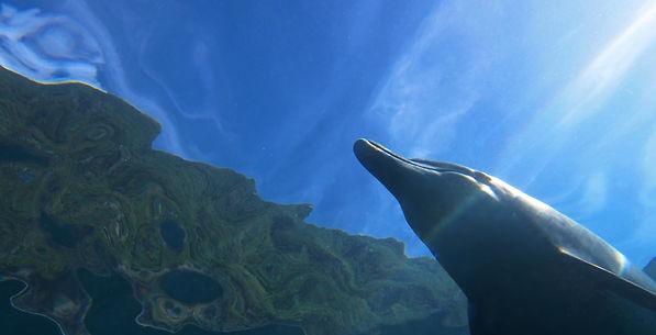 海・空・大地 御蔵島とイルカ