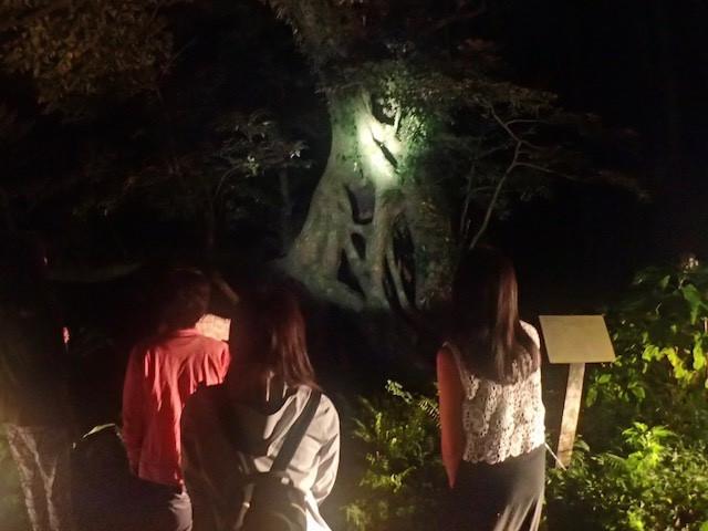 御蔵島ナイトツアー