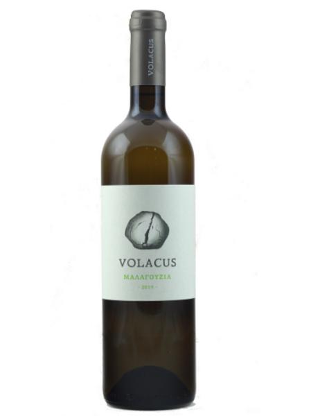 Volacus Malagouzia