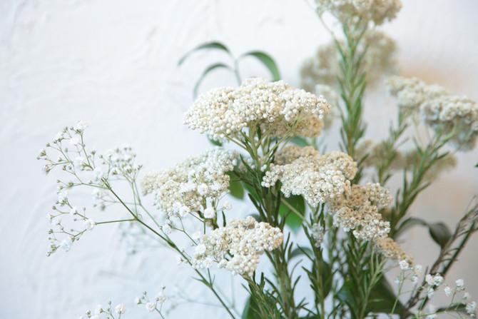 今週の花☆