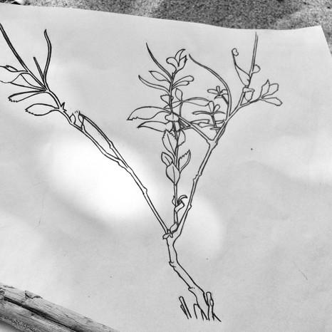 Flora/Flore
