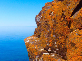 Lichens on a rock.