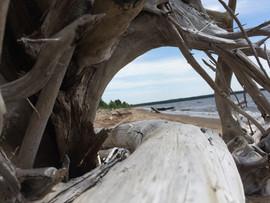 Driftwood framed.