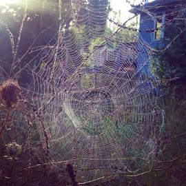 oliphant spiders web.