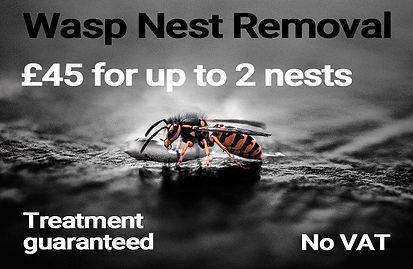 Wasp removal services