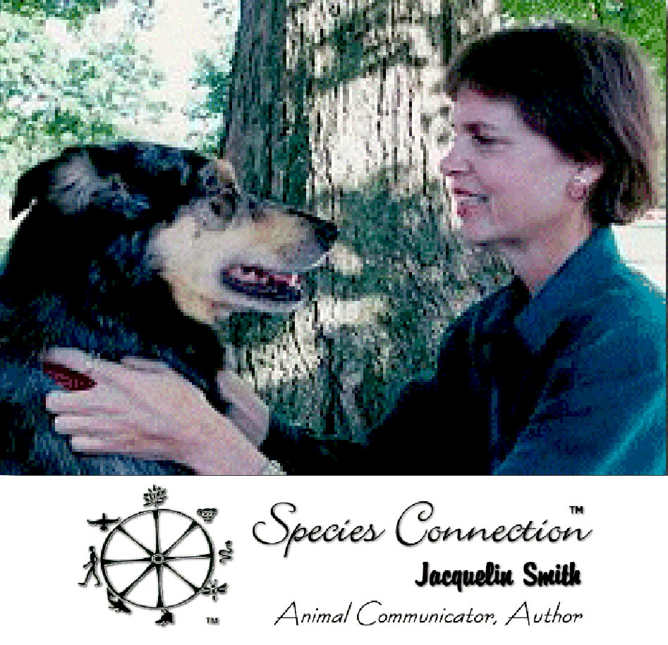 Jacquelin Smith Animal Communicator