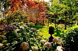Natures Garden