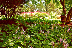 Shade and sun Cottage Garden