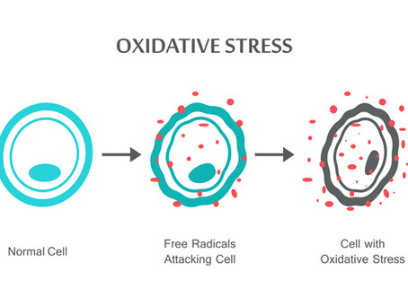 Free Radicals: The Enemy of Youth