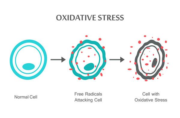 free radicals skin damage uv damage cell damage antiaging aging