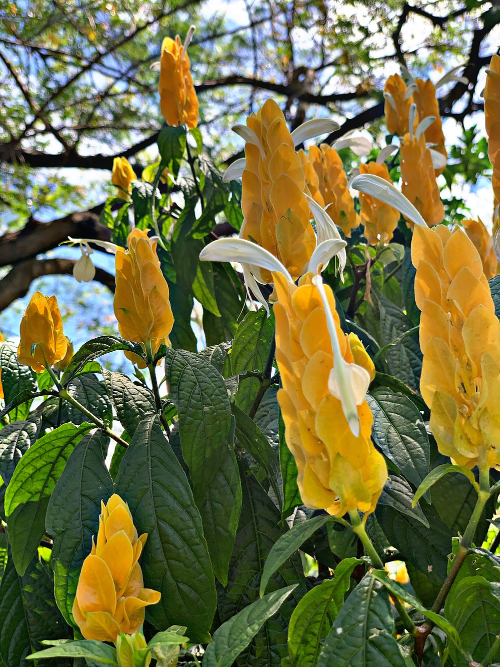 Power of the flower, these gorgeous Hawaiian flowers stand tall in their natural beauty