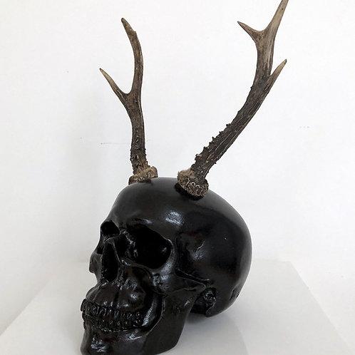 Black Antler Skull