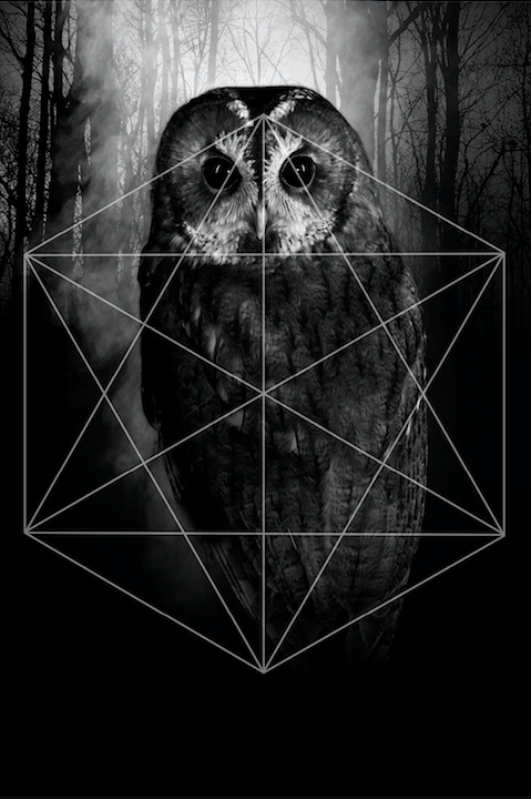 TRILOGY OWL postcard