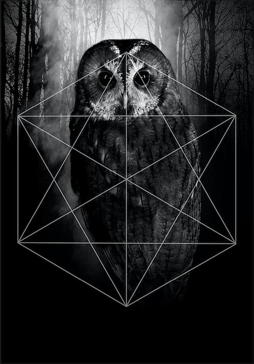 Trilogy owl / Mia Selin