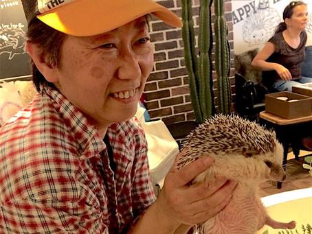 Moje zážitky z ježčí, soví a psí kavárny aneb Jak se přepracovaní Japonci mazlí se zvířátky