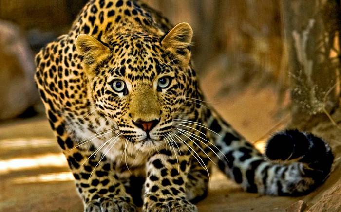 Les animaux que l'on peut observer au Sri Lanka