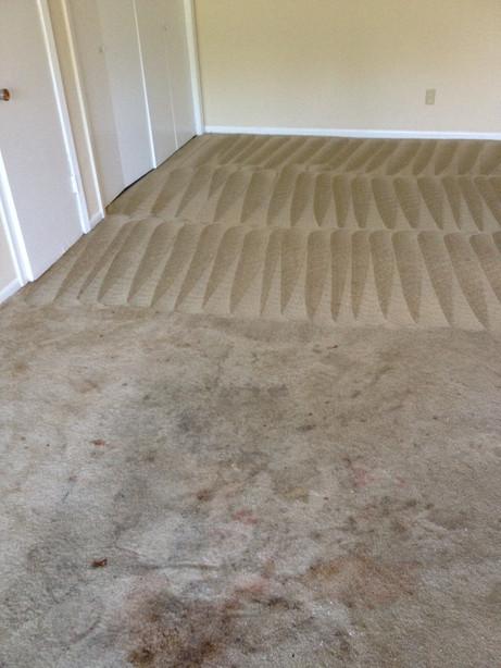 carpet restoration roto.JPG