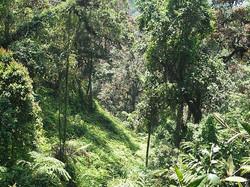 DEEP FOREST TRAIL ADIDAS