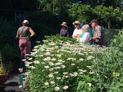 Community Gardener at Baldwin Farm