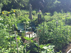 Each garden plot has a personality