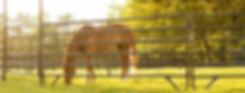 tarter-equine.jpg