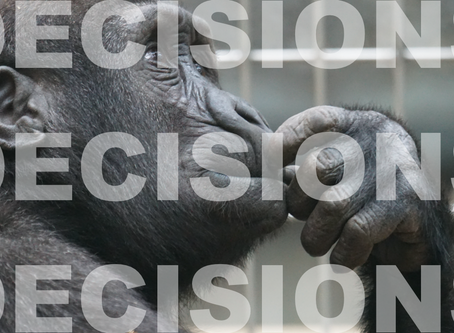 """Decisions, Decisions, Decisions..."""