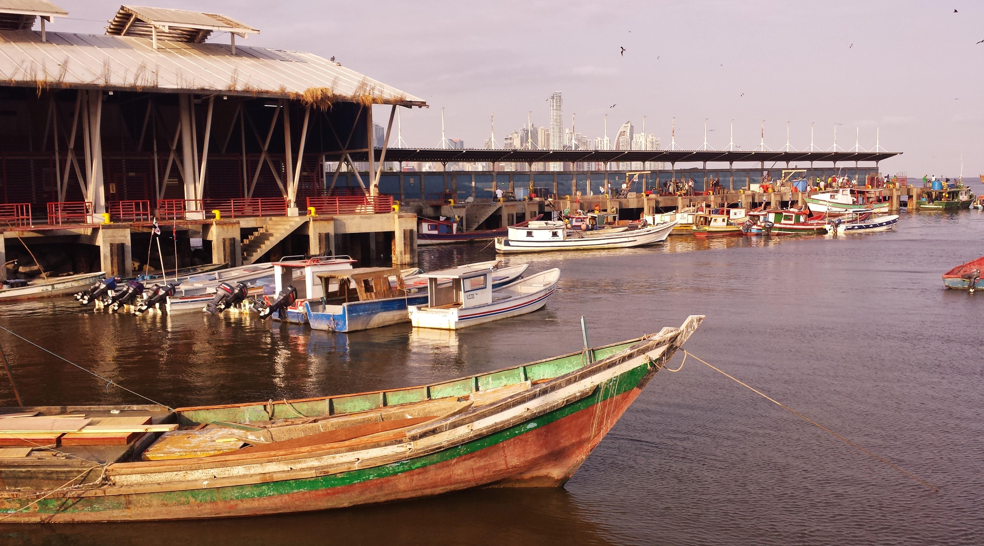 Fishing Boats at the Marina