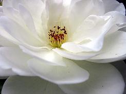 flower-1190090_1920.jpg