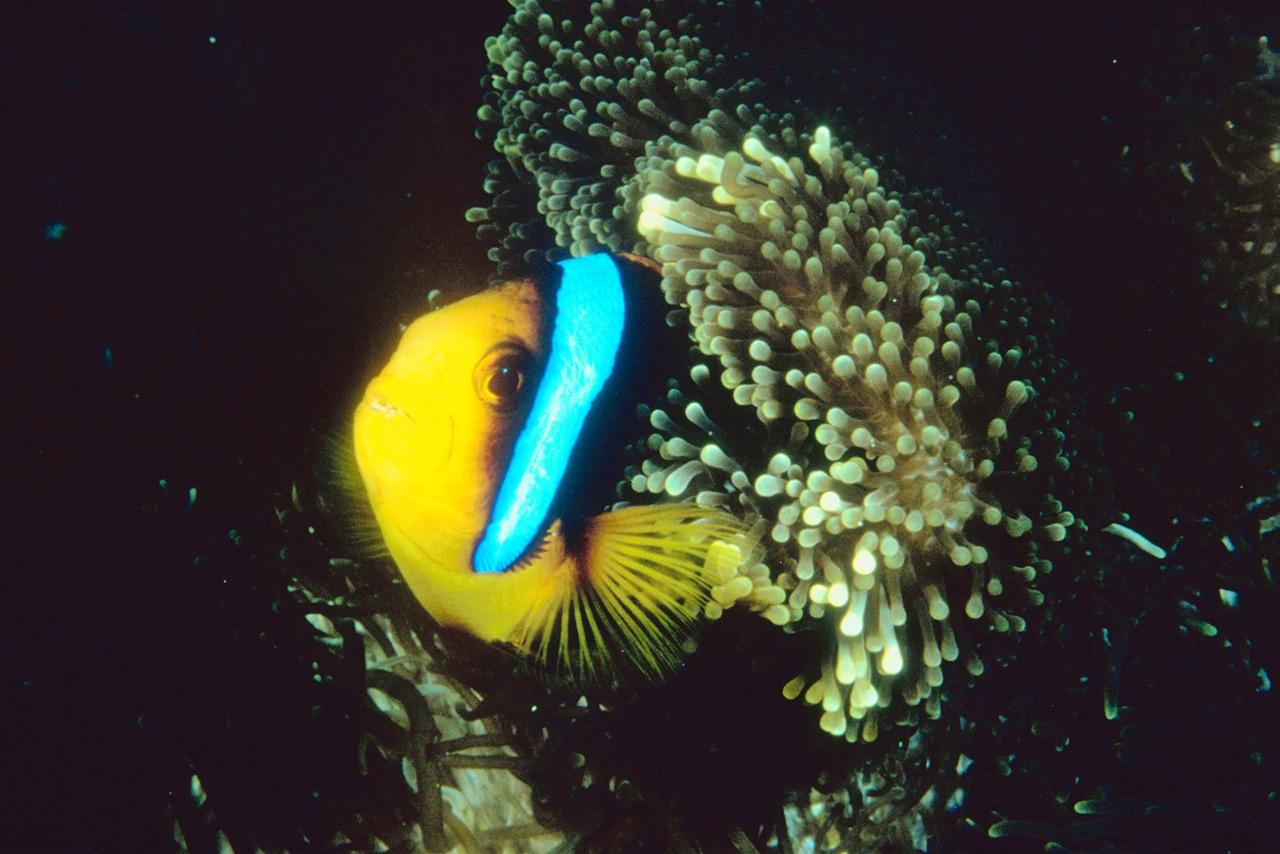 Coral Conspiracies #Coralspiracy?