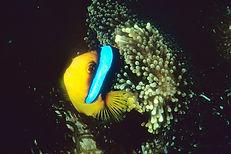 Reef fishes, Poisson de récif