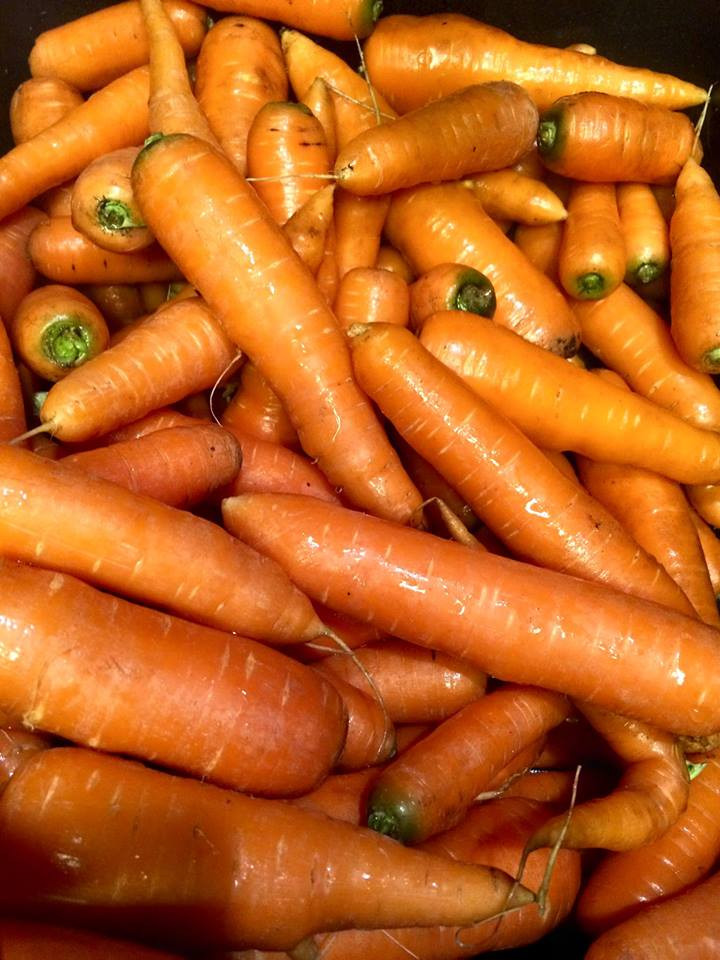 You can't beat an Alaskan carrot.