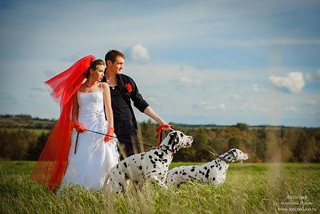 Фотограф на свадьбу услуги и цены в СПб | Свадебная фотосессия в Санкт-Петербурге