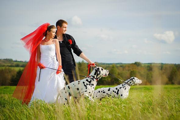 свадебный-фотограф-спб-свадьба-фото-фот